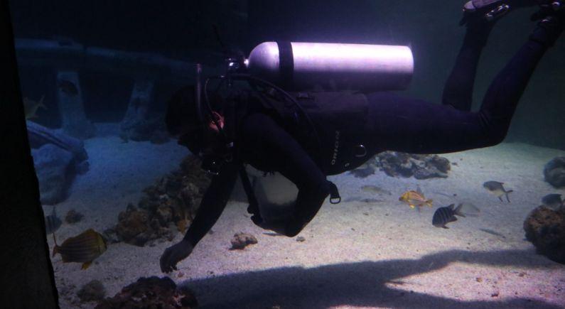 Oceanic Aquarium em Balneário Camboriú
